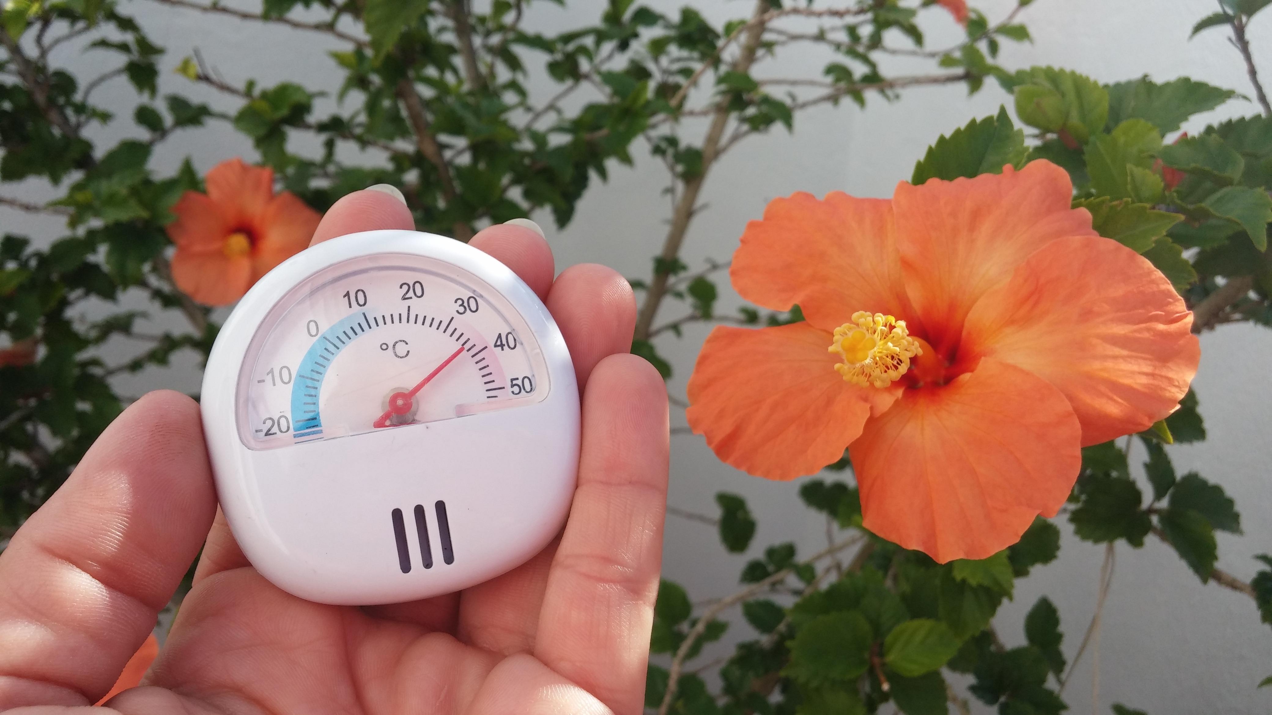 Sommerliche Temperaturen im Dezember