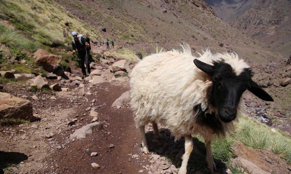 Jebel Toubkal Trekking